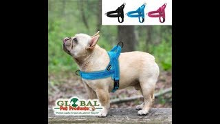 dog collars Top Pet Supplies & Products With Free Shipping