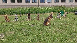 Собаки-солдаты: Зара уходит в армию