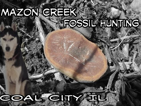 Fossil Hunting Illinois Pennsylvanian Period Fern Fossils Episode 1 ,  Coal City, IL