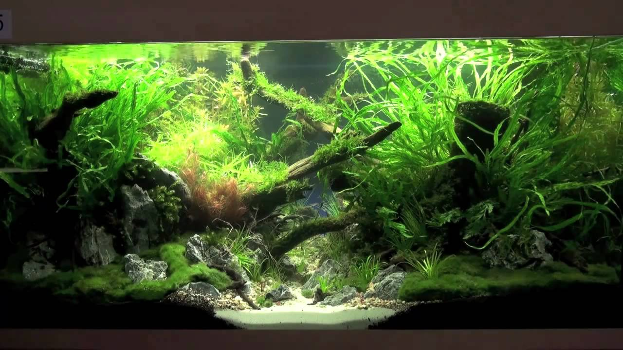 Planted Aquarium Competition Hannover 2011 - YouTube