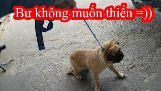 Giờ mới phát hiện ra thằng Bư bị Gay - Dẫn Bư đi thiến thôi =)) PUGK PET