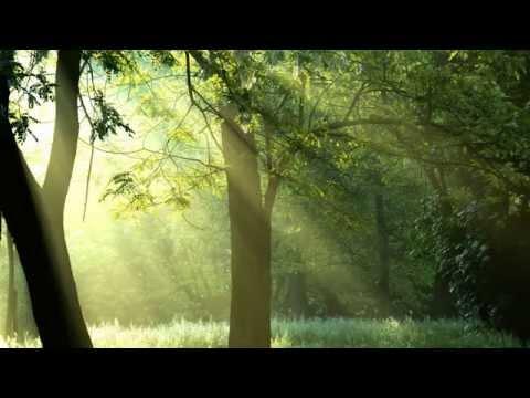 Клип Antonio Lucio Vivaldi - Tosco Fantasy