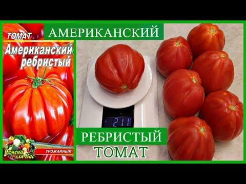 СЛАДКИЕ, УРОЖАЙНЫЕ ТОМАТЫ-ГИГАНТЫ *МОЙ ОПЫТ ВЫРАЩИВАНИЯ *АМЕРИКАНСКИЙ РЕБРИСТЫЙ* ОБЗОР УРОЖАЯ   американский   урожайные   ребристый   томатов   сладкие   крупные   гиганты   томаты   лучшие   томат