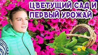 Урожайный сад и огород своими руками   Дачные советы