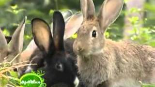 Best Rabbit Farm In Malappuram Part 1