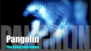 PANGOLINS  THE ALIEN INTERVIEWS