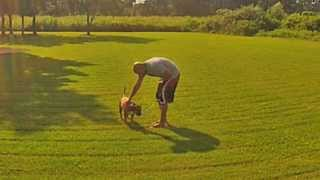House Training Your Dog: The Basics