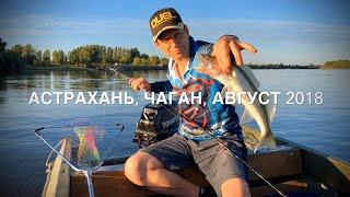 Отдых и рыбалка в Астраханской области, с. Чаган, август 2018 года