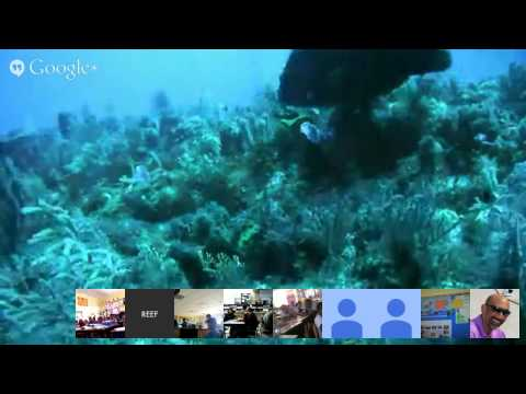 Grouper Moon Project Live Feed Dive From Spawning Aggregation - 2/9/15