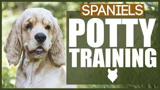 How To Potty Train Your SPANIEL