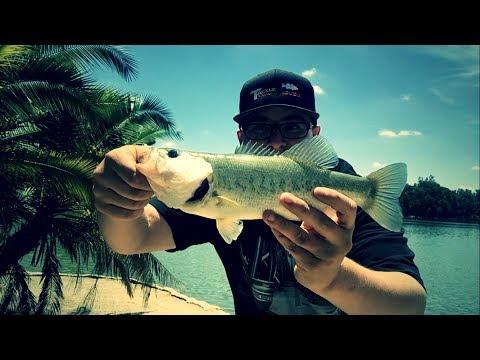 Bass Fishing Lake Evans & Topwater Techniques Ft. Snag Proof Pro - Frank Tellez