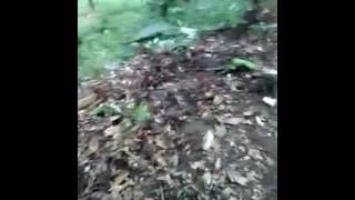 Download Video video kocak anak main di hutan MP3 3GP MP4