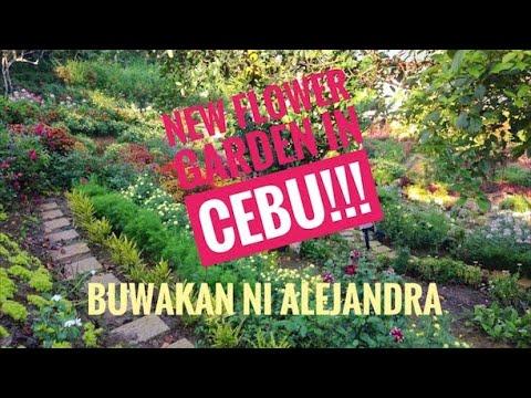 Buwakan ni Alejandra in Balamban, Cebu