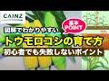 カインズ野菜図鑑 トウモロコシの育て方 の動画、YouTube動画。