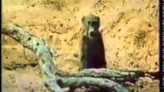 Repeat youtube video เมื่อลิงเมา และเหล่าสัตว์ก็าเมา ขำๆ ฮาๆ ตามประสาสัตว์