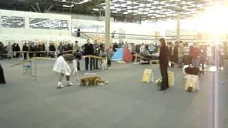 Конкурс на самую умную собаку. г. Пермь, 2007 год