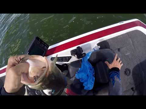 Falcon Lake Elite Bass Club PRACTICE (August Tournament)