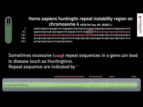 What does DNA sound like? 04 Repetitive CAG in Gene