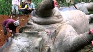Смерть животных, смерть людям