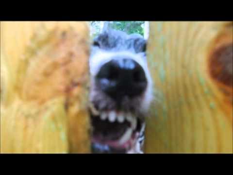 Neighbor dog barking