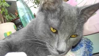 Гладим серого кота.