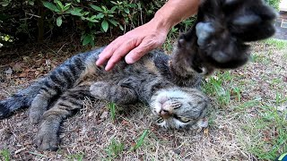 公園で寝転ぶ野良猫をナデナデしたら喜んでエアーフミフミしてカワイイ