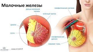 Здоровье молочной железы