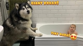 Animal's Cutest Reactions To Baby In The Bath! (Except Phil!!)