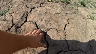 видео Методы улучшения качества почвы для газона