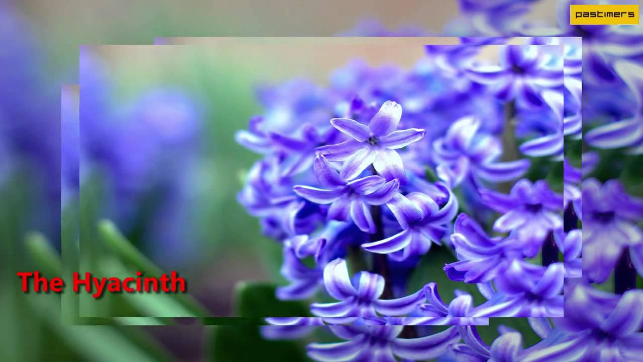 Top 10 List Of Most Beautiful Flowers In The World4 Youtube