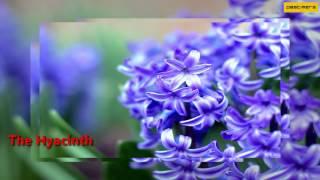 Top List Most Beautiful Flowers World Mp4