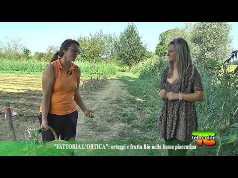 Pianeta Verde: Fattoria L'Ortica, ortaggi e frutta bio nella bassa piacentina 04.11.2020