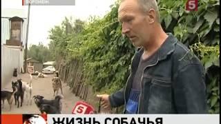 Дора. Воронеж