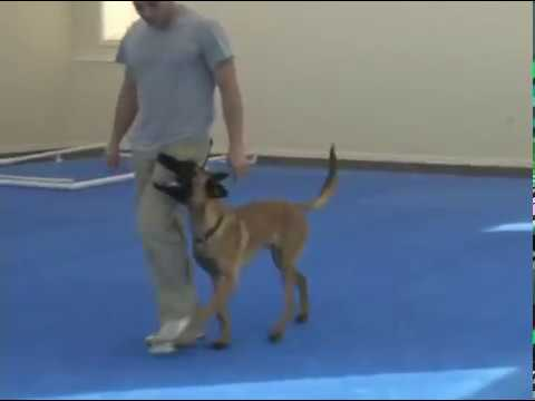 Forrest Micke Dog Training
