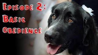 How To Train Your Newfoundland - Episode 2 Basic Obedience