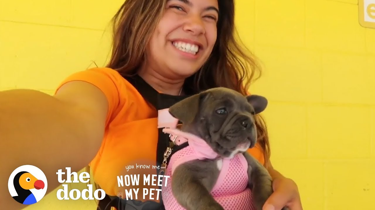 Raising A Dog Is Like Raising A Human With Adelaine Morin | The Dodo You Know Me Now Meet My Pet