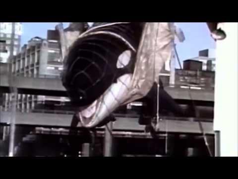 Blackfish (2013) - SPA