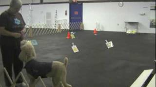Ttouch In The Canine Classroom: Thundershirt For Canine Performance Anxiety