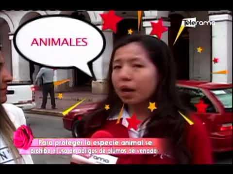 Caíste: ¿Para proteger la especie animal se prohibe el uso de abrigos de plumas de venado?
