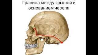 Топография черепа