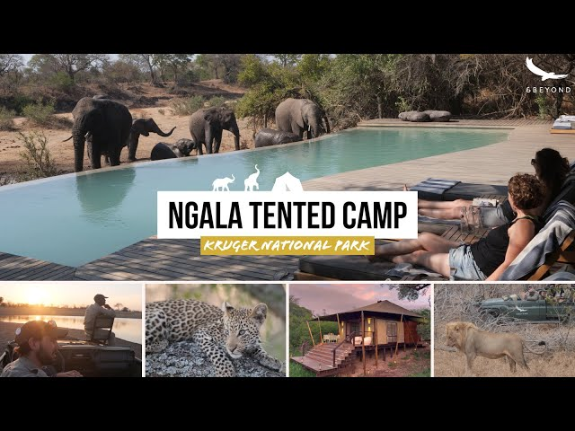 andBeyond Ngala Tented Camp HIGHLIGHTS Timbavati Safari Lodge Kruger NP