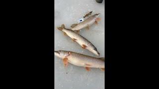 Зимняя рыбалка. Ловля щуки сетями