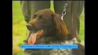 Обучение на ловното куче - Hunting dog training