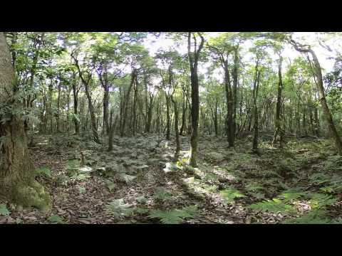 Australian Rain Forest Environment - 360 Video [Royalty Free Stock Footage] $350