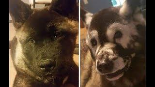 У этого пса проявился необычный окрас, это был симптом тяжелой болезни!