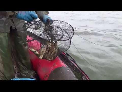 сколько стоит лицензия на ловлю раков