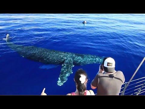 Gemini Charters - Maui, Hawaii