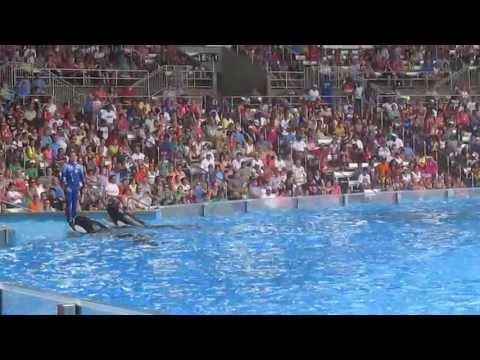 Show de ballenas Seaworld orlando Fl