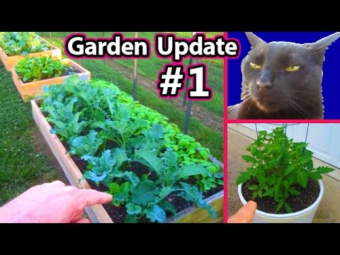 Garden Update May 12, Raised Bed Square foot Vegetable Gardening Healthy Raw Food