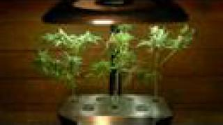 All Comments On Growing Weed In An AeroGarden Deluxe YouTube